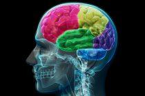 Mjesto u mozgu u kom se krije zlo!