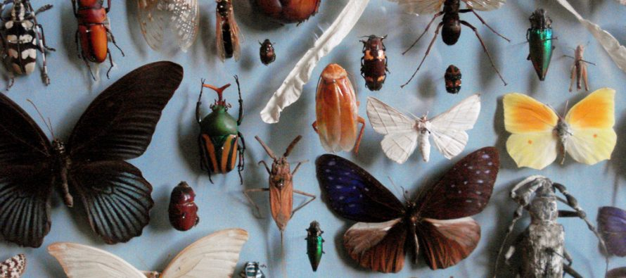 Poklonili univerzitetu kolekciju sa više od milion insekata!