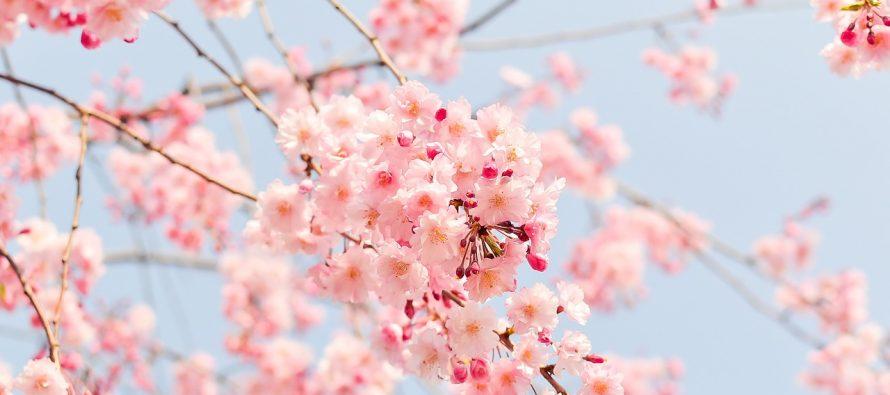 Sve najzanimljivije činjenice o Japanu, Zemlji izlazećeg sunca