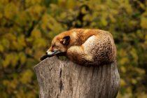 Životinje i njihove navike spavanja