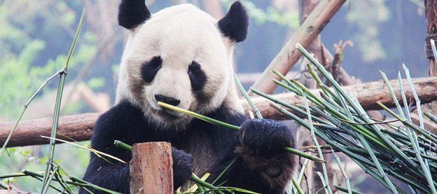 Zašto su neke životinje crno-bijele?