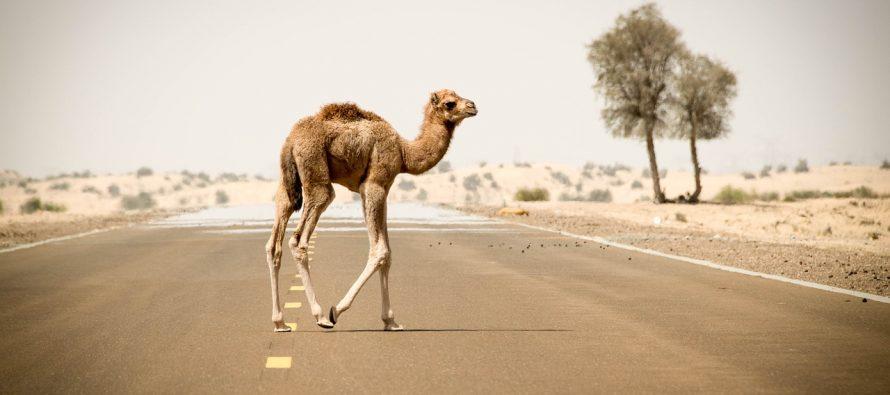 Koje životinje možete sresti van njihovih prirodnih staništa?