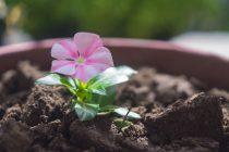 Da li kućne biljke mogu biti korisne za vaše zdravlje?