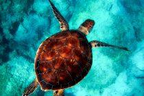 Alarmantno: Okeani se zagrijevaju brže nego što smo predivdeli!