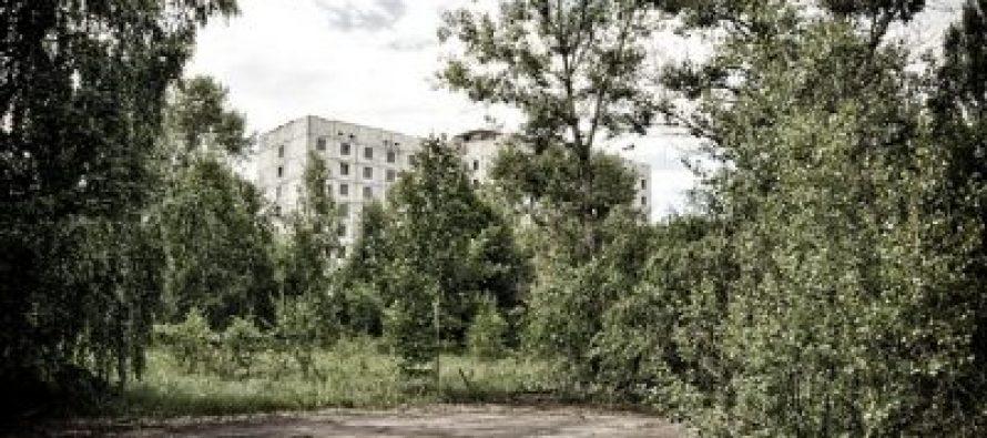 Činjenice o životinjama Černobilja