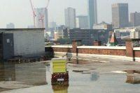 Urbani pčelari mogu sprečiti apokalipsu