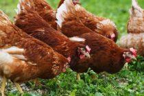 SAD: Bez ljubljenja živine, molimo!