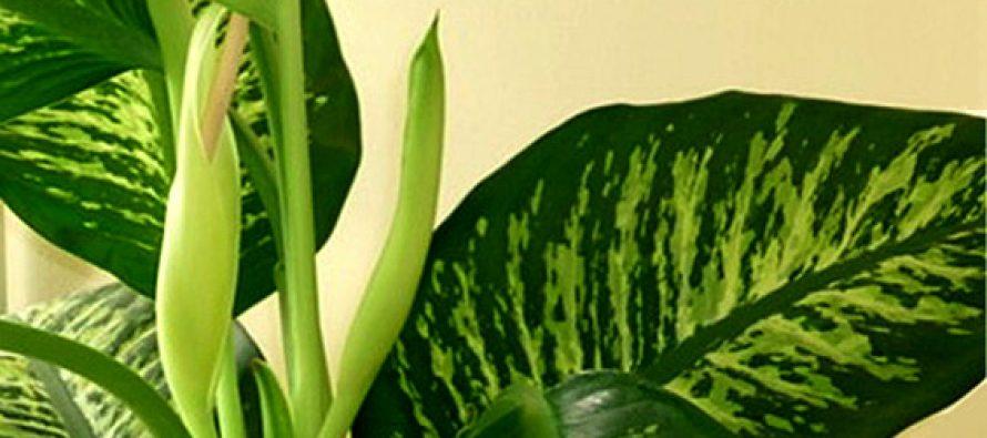 Biljke: Lepe i opasne